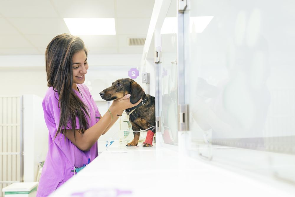 Jovem profissional formada no curso de Medicina Veterinária cuidando de um cachorro
